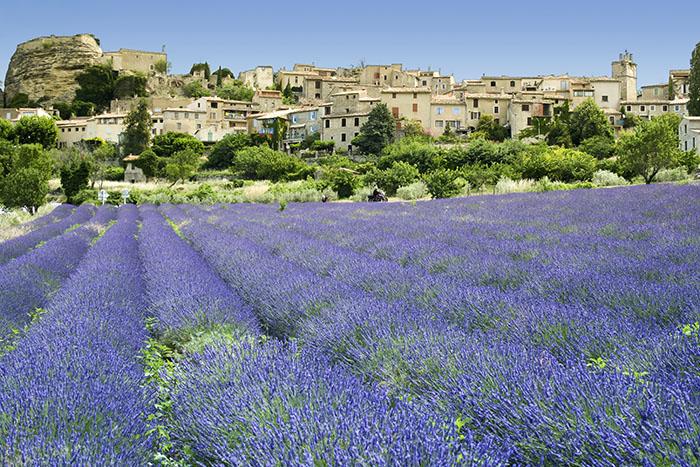i lavendelfalt i staden provence i sodra frankrike