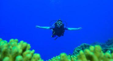 En drömvärld under ytan i Curacao