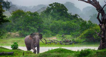 Vågat och lugnt i Sri Lanka