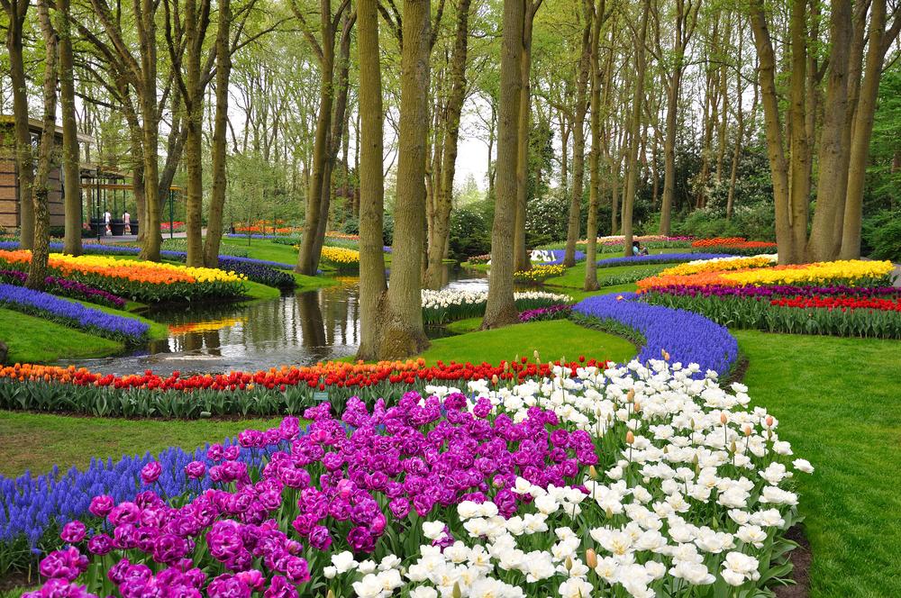 Tulpaner i alla möjliga färger i Keukenhofs trädgård.