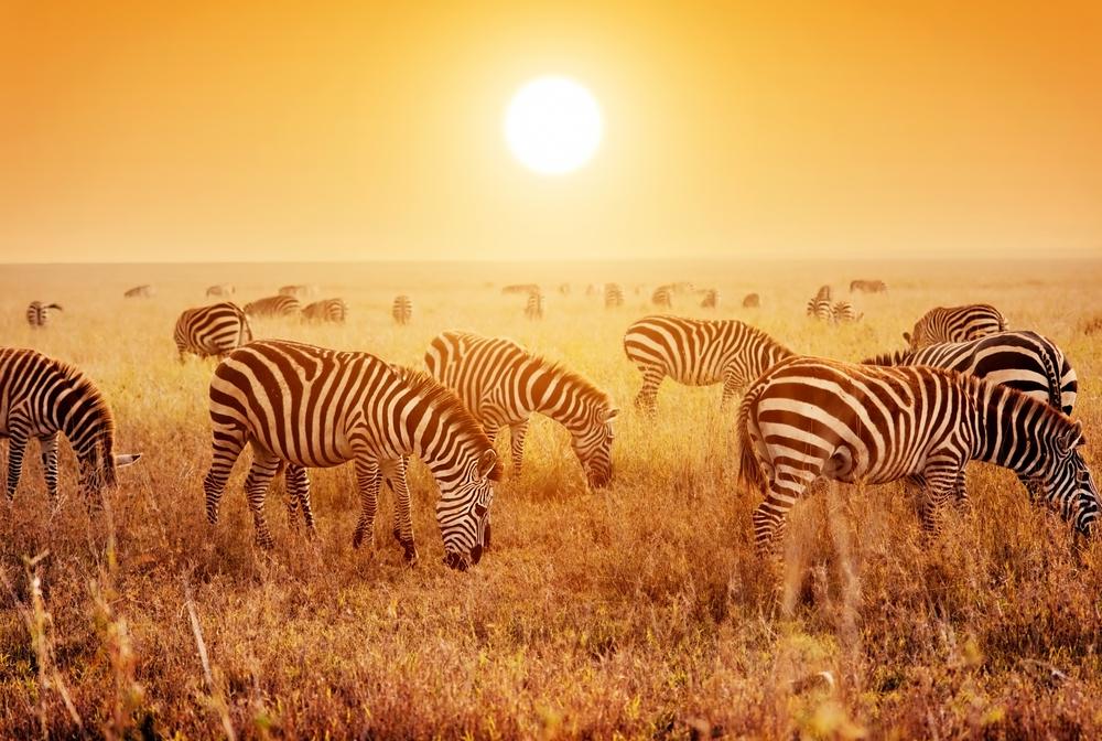 Sara är inte ensam om att vilja åka på safari i  Afrika.
