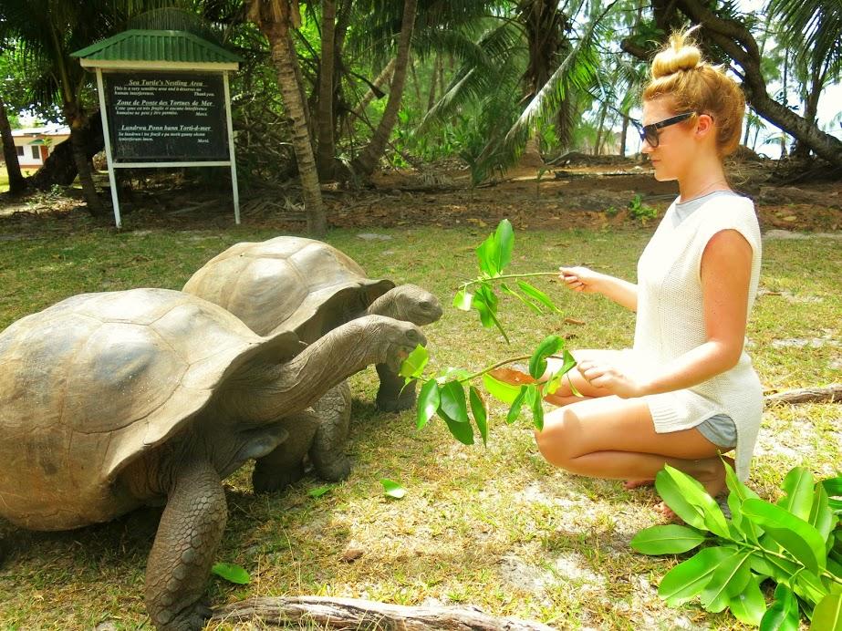 Med Sköldpaddor på Seychellerna
