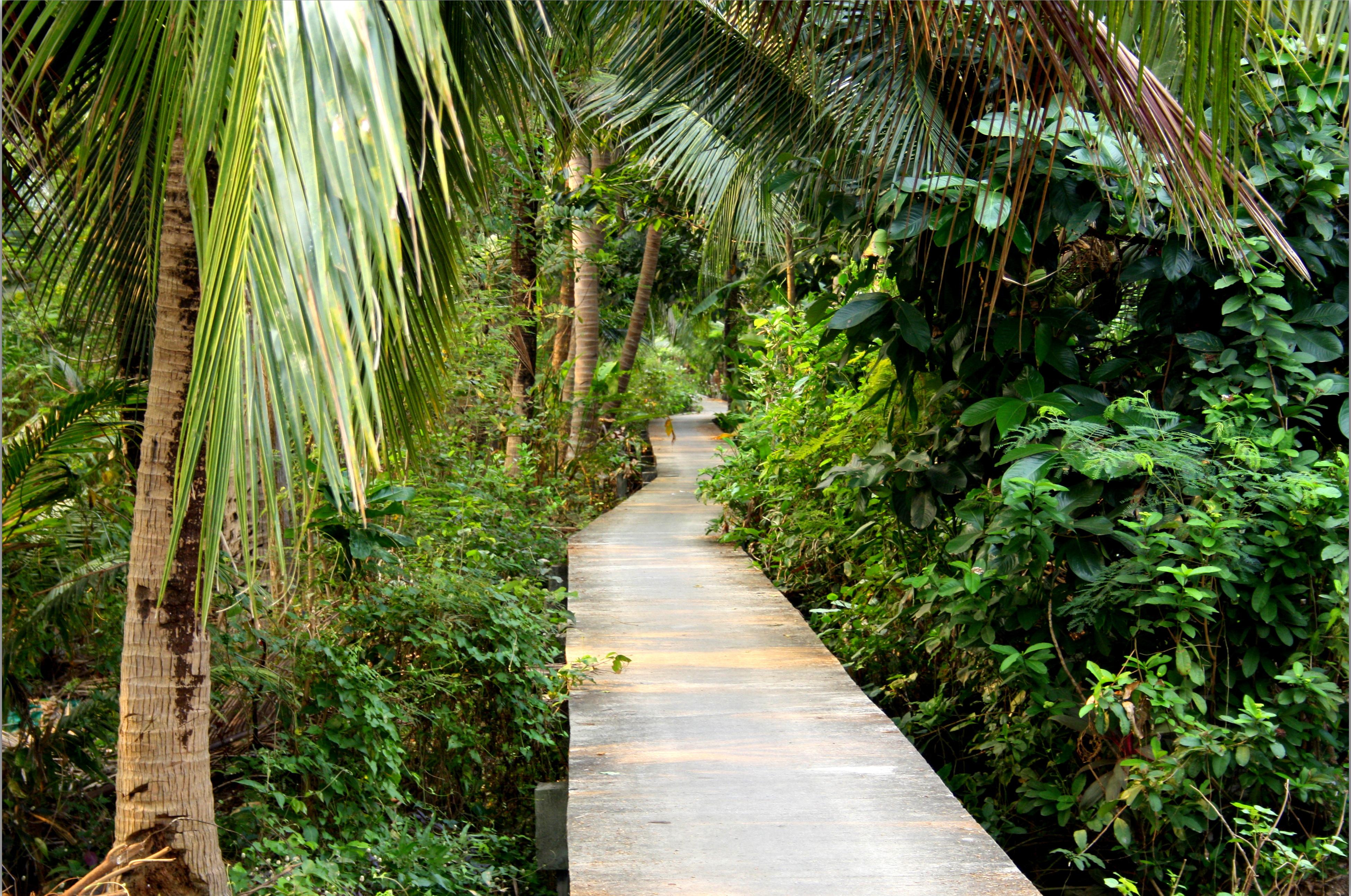 Bang Kra Jao - Bangkoks djungel