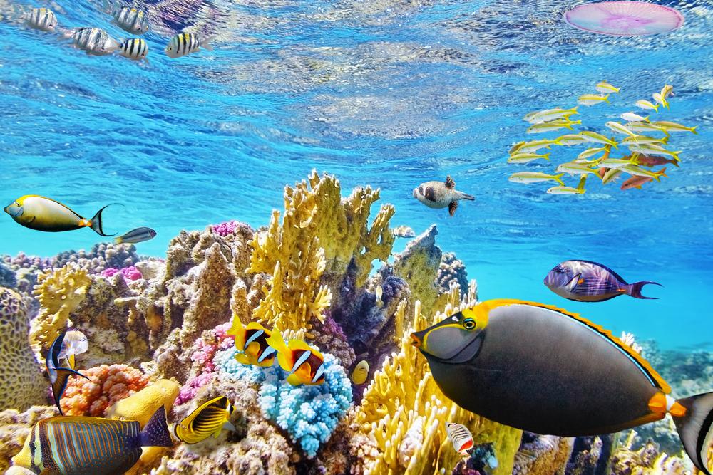 Barriärrevet, Australien. Färgglada fiskar och mångfärgade koraller.
