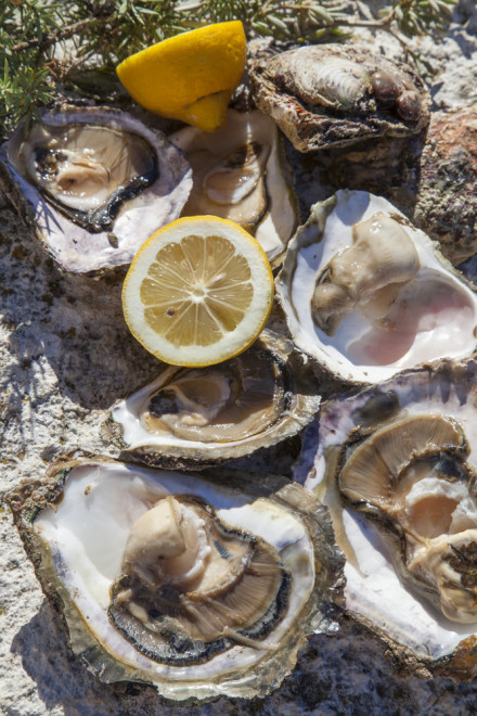 oysters croatia