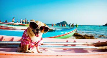 Checklista för dig och hunden på semestern