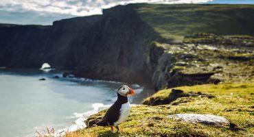 En lokalbos guide till Island: Fem platser du inte får missa.