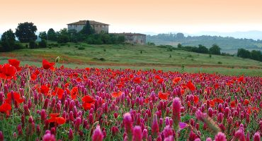 6 av de vackraste parkerna i Europa för att uppleva vårens blomsterprakt