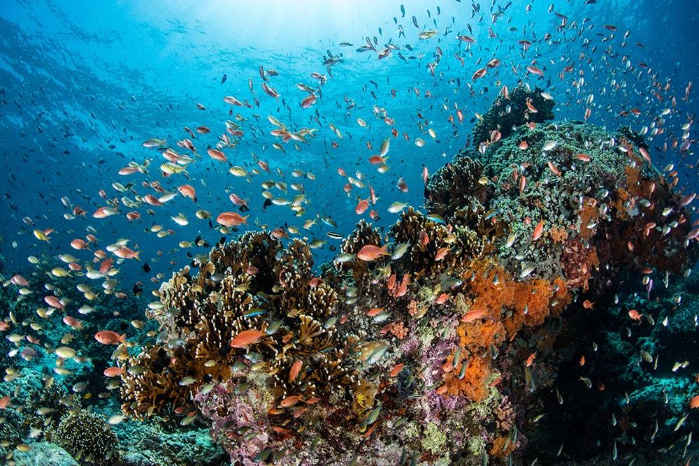 bali dykning resa ensam